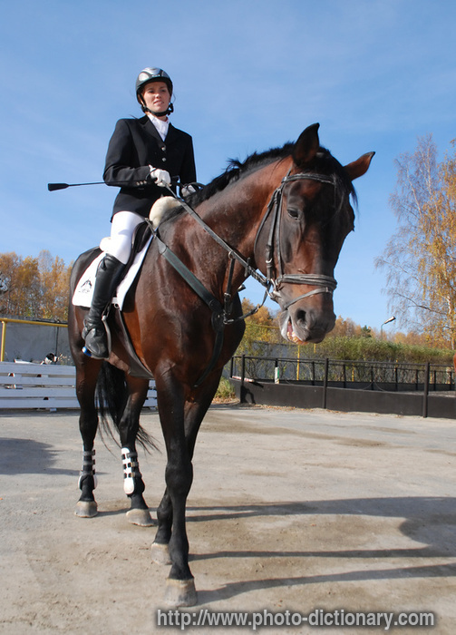 equestrian photopicture definition at photo dictionary equestrian 503x700
