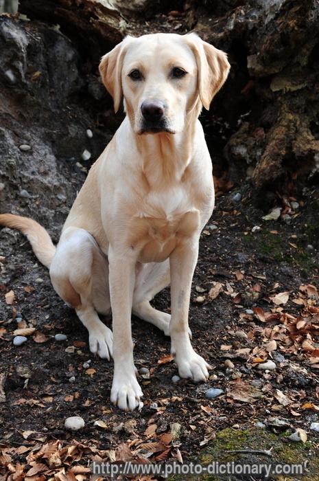 Nome cani femmina nome cani maschi nomi per cani femmina for Nomi per cani maschi taglia piccola
