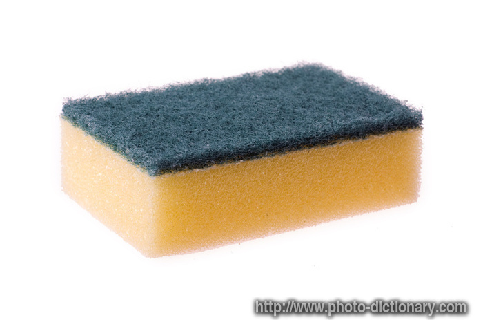 Sponge Photo Picture Definition At Photo Dictionary Sponge Word And Phrase Defined By Its