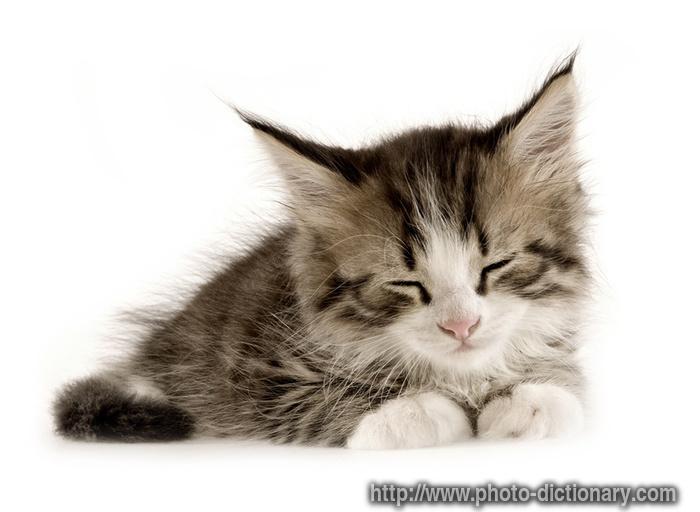 Free Kitten* Kitten - Straight Up