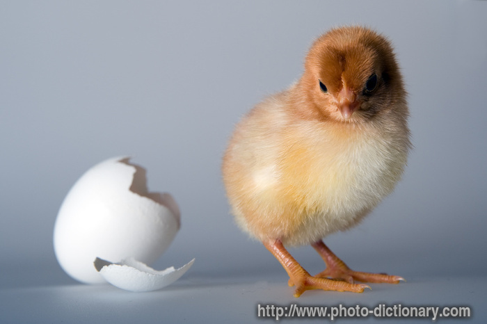 Hatched photo picture definition at photo dictionary for Down the hatch meaning