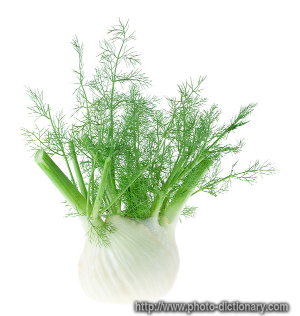 Fennel photo picture definition at photo dictionary for Indoor gardening meaning