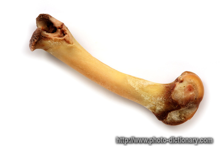 bone - photo/picture definition - bone word and phrase image