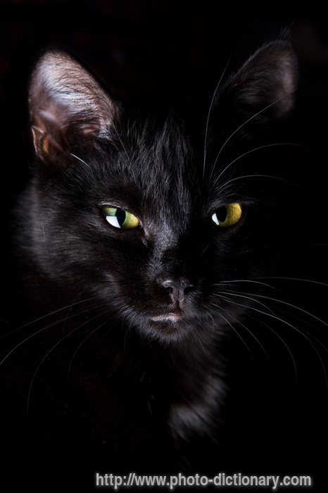 http://www.faqs.org/photo-dict/photofiles/list/3331/4425black_cat.jpg