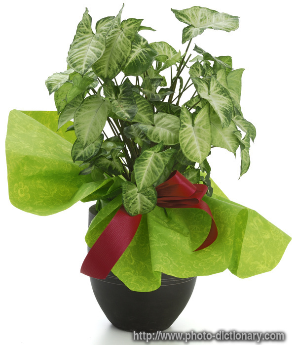 Agriculture and plantation uses of ornamental plants for Ornamental vegetable plants