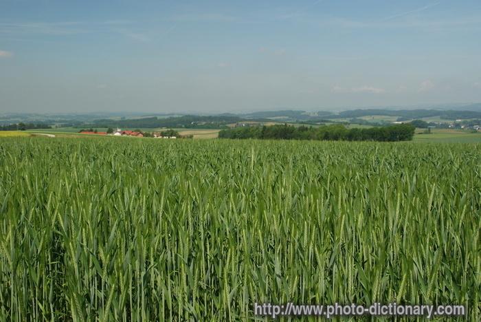 asher farms inc