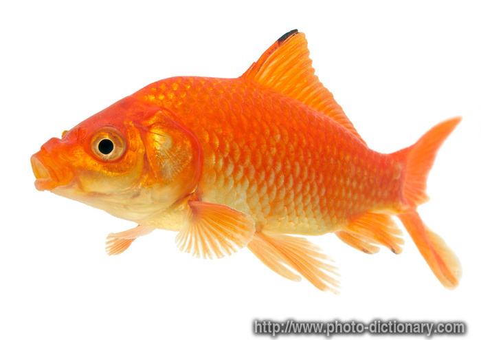 What is the meaning of carp driverlayer search engine for What does carp mean