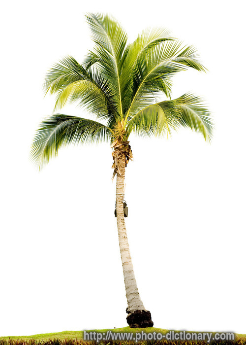 How to install a palm tree