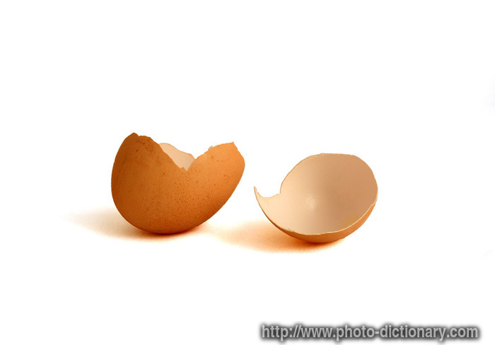 eggshell photo picture definition at photo dictionary