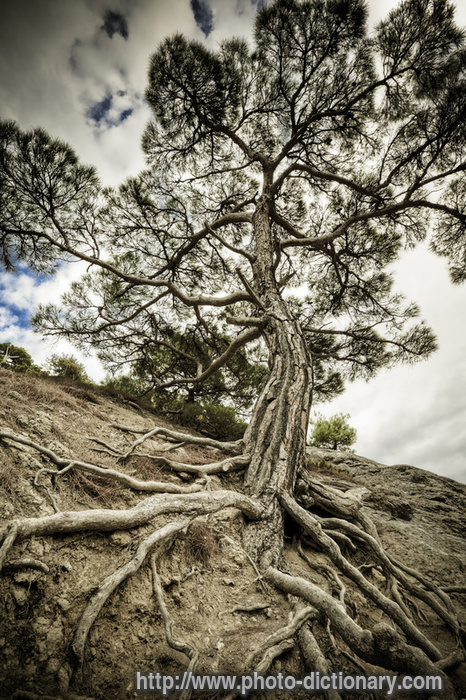 Roots photo picture definition at photo dictionary for Soil meaning in english