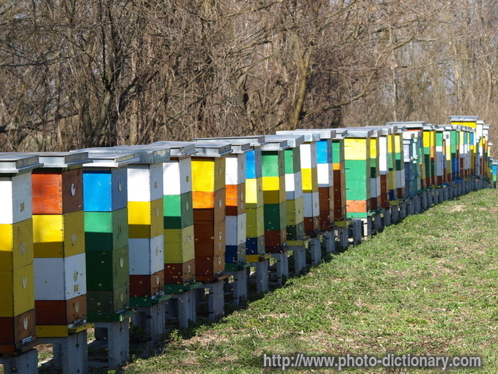Beehives And Bears The Life Of Bee