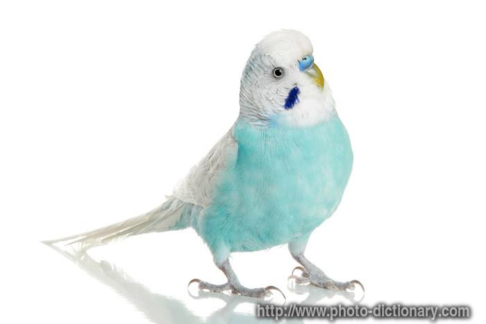 Muhabbet Kuşları Hakkındaki Bilgiler Soru Cevaplar
