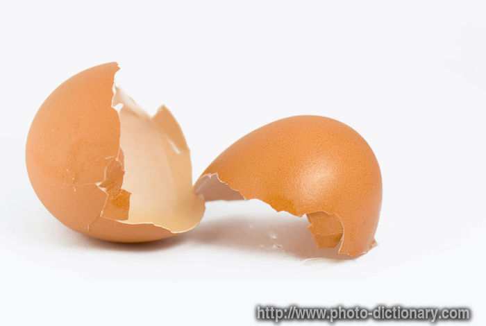 egg shell - photo/picture definition - egg shell word and phrase image