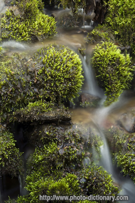 Mossy Rocks Photo Picture Definition At Photo Dictionary