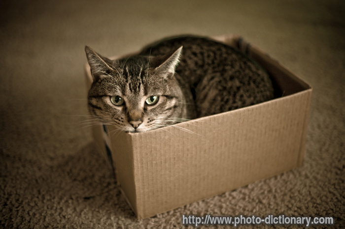 cat in a box photopicture definition at photo dictionary cat cat in 700x466