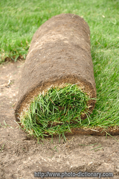Sod Roll Photo Picture Definition At Photo Dictionary Sod Roll Word And Phrase Defined By