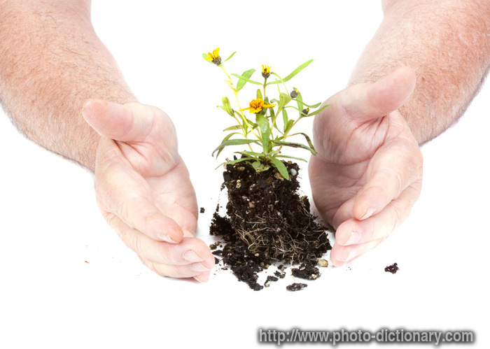 seedling flower - photo/picture definition at Photo ...