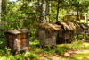 ancient beehives - photo/picture definition - ancient beehives word and phrase image