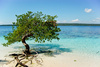 mangrove - photo/picture definition - mangrove word and phrase image
