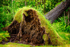 fallen tree - photo/picture definition - fallen tree word and phrase image