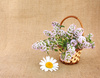 thyme bunch - photo/picture definition - thyme bunch word and phrase image