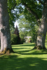 secular trees - photo/picture definition - secular trees word and phrase image