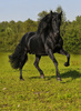 black beauty - photo/picture definition - black beauty word and phrase image