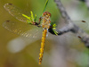 moustached darter - photo/picture definition - moustached darter word and phrase image