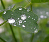 dew - photo/picture definition - dew word and phrase image