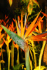 bird of paradise - photo/picture definition - bird of paradise word and phrase image