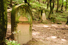 jewish tombstone - photo/picture definition - jewish tombstone word and phrase image