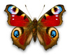 admiral butterfly - photo/picture definition - admiral butterfly word and phrase image