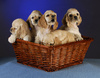 puppies litter - photo/picture definition - puppies litter word and phrase image