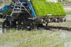 rice transplanting - photo/picture definition - rice transplanting word and phrase image