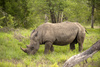 rhino - photo/picture definition - rhino word and phrase image
