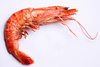 shrimp - photo/picture definition - shrimp word and phrase image