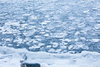 sea ice - photo/picture definition - sea ice word and phrase image