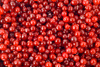 cranberries - photo/picture definition - cranberries word and phrase image