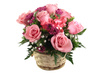 pink roses - photo/picture definition - pink roses word and phrase image