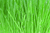 grass - photo/picture definition - grass word and phrase image