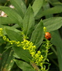 ladybird - photo/picture definition - ladybird word and phrase image