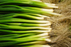 spring onion - photo/picture definition - spring onion word and phrase image