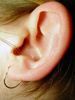 ear - photo/picture definition - ear word and phrase image