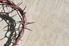 crown of thorns - photo/picture definition - crown of thorns word and phrase image
