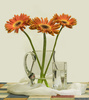 African daisy - photo/picture definition - African daisy word and phrase image