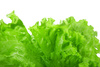 lettuce - photo/picture definition - lettuce word and phrase image