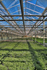 greenhouse - photo/picture definition - greenhouse word and phrase image