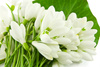 snowdrop - photo/picture definition - snowdrop word and phrase image