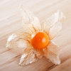 physalis - photo/picture definition - physalis word and phrase image