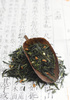genmaicha - photo/picture definition - genmaicha word and phrase image